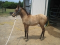 2012-filly-2