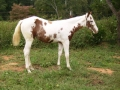 2012-max-filly-rt-best
